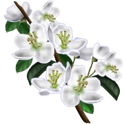 In loving memory of ellen patterson green hill presbyterian church white flowers ms ellen patterson 58 of birmingham al and formerly of enterprise al died on tuesday august 13 2013 memorial services will be held mightylinksfo